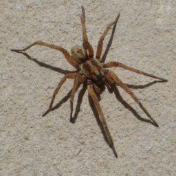 Уничтожение пауков в Новокузнецке